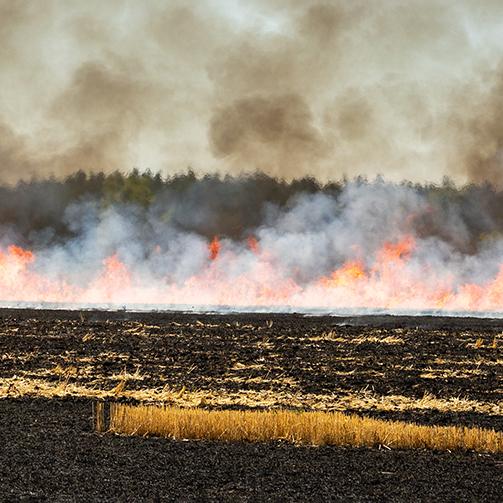 Opinion of BHSS on stubble burning – historical plan