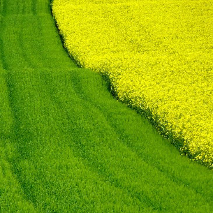 Органиката в почвата като компонент на нейното здраве.